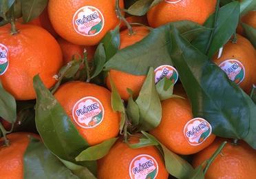 Mandarina clementina con hoja