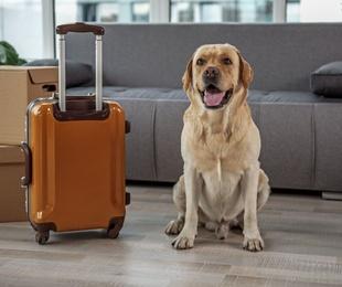 Requisits per viatjar amb mascotes