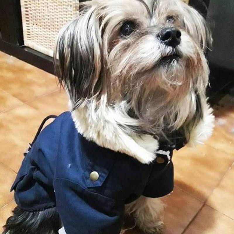 Complementos para mascotas: Servicios Veterinarios de Kan's&co Clínica Veterinària