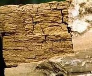 Tratamientos para la madera