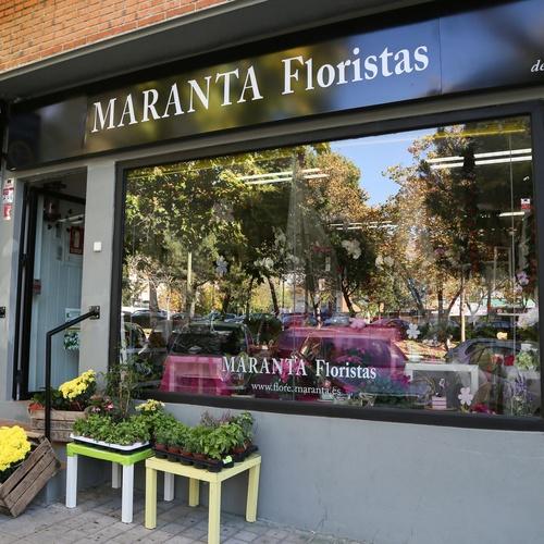 Floristerías en    Flores Maranta