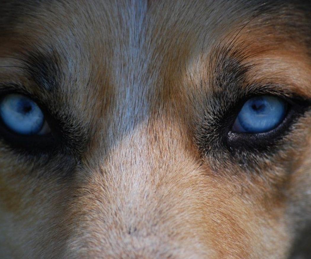 Los seguros para perros potencialmente peligrosos