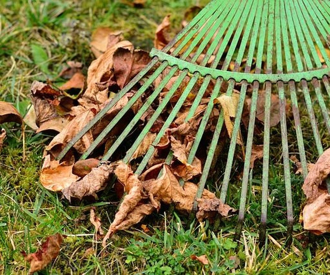 Trucos para mantener cuidado tu jardín durante el otoño y el invierno