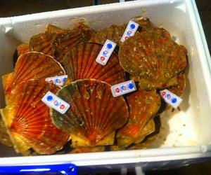 proveedores de pescados y mariscos