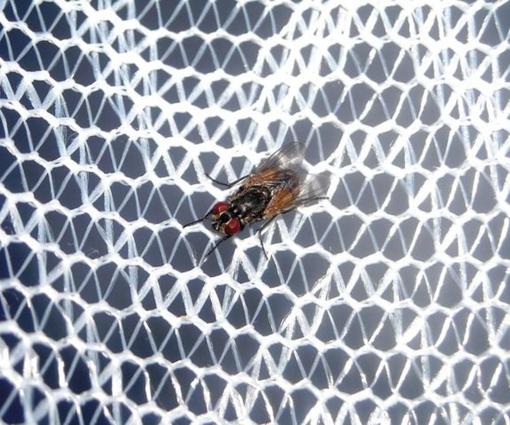 Diferentes tipos de mosquiteras
