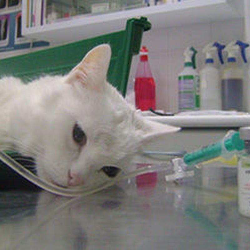 Hospitalización: Servicios veterinarios de Clínica Veterinaria Leganés Norte