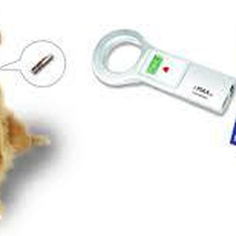 Identificación: Especialidades de Clínica Veterinaria Albeitar