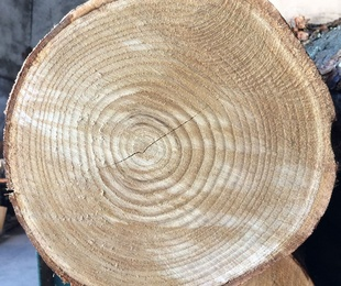Conozcamos más acerca de la madera.