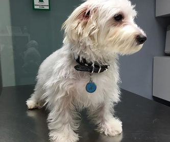 Alimentación y accesorios: Servicios veterinarios de Clínica Veterinaria Peludines