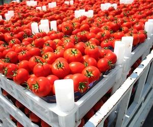 Por qué los tomates ya no saben como antes