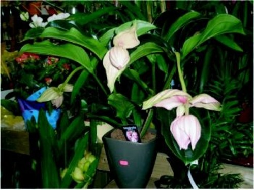 Fotos de Jardines (diseño y mantenimiento) en Rivas-Vaciamadrid | Garden Rivas Flores y Plantas