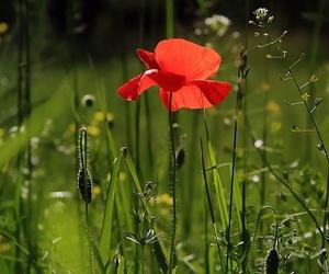 Mantenimiento de jardines más allá del resultado estético