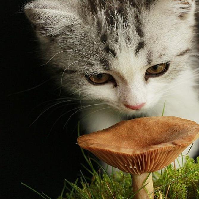 El problema de la ingesta de objetos en gatos