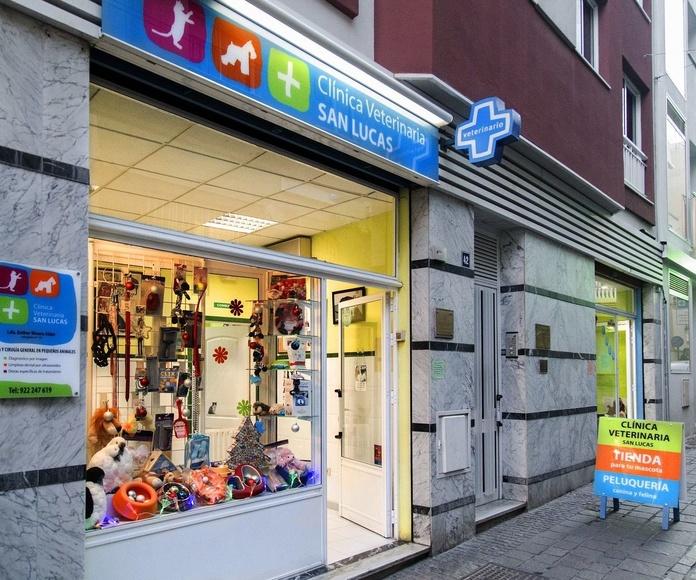 Nuevo servicio de peluquería canina y felina San Lucas