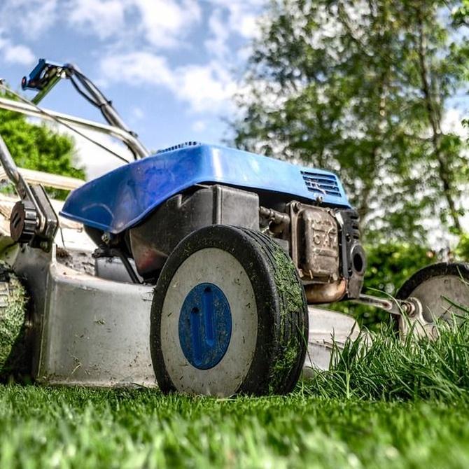 Cinco consejos de jardinería para tu hogar