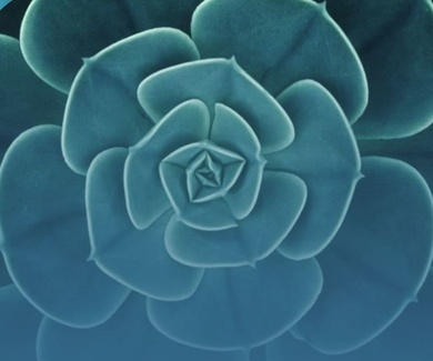 Fascinantes patrones en las plantas esconden secretos matemáticos