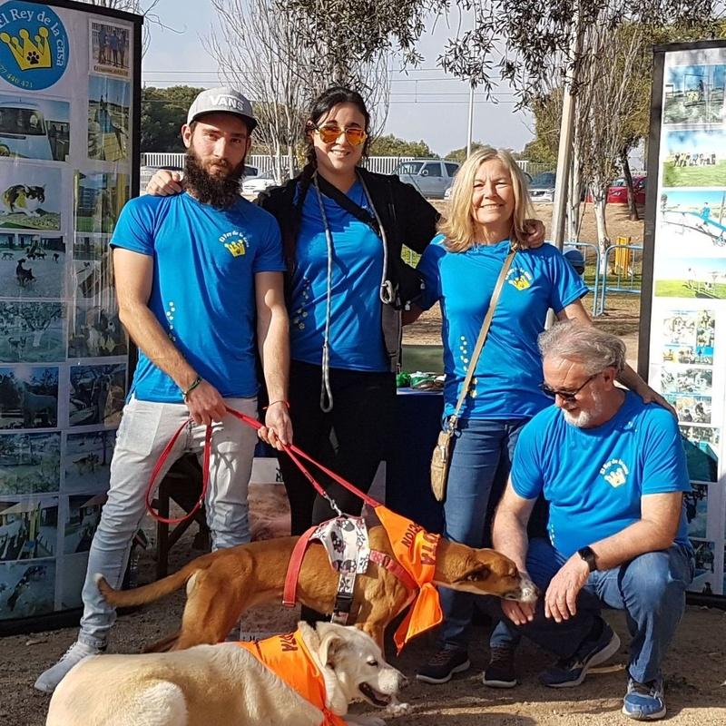 Perros en adopción - 5ª FERIA DE ADOPCIÓN - organizado por el Ayuntamiento de El Campello - Fernando, Susana, Maria e Iñaki (solo falta Bruno) con La La y Blanca