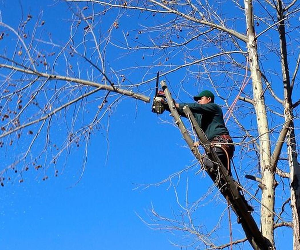 5 aspectos sobre la poda de árboles
