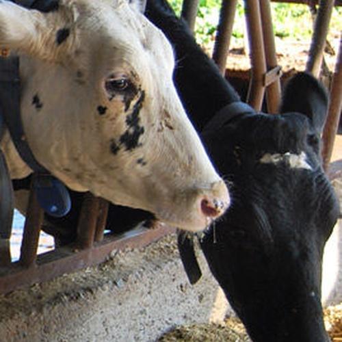 Productos lácteos en Nueva Jarilla | Lácteos Artesanía