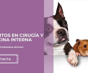 Veterinarios de animales exóticos en Albacete: Clínica Veterinaria Al-Beitar