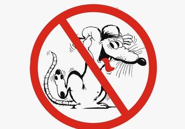 Control de ratas