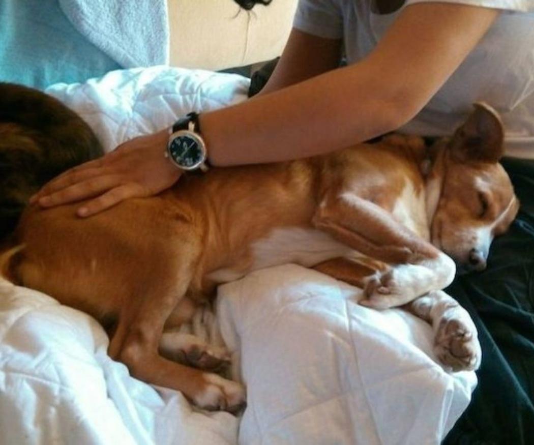 La terapia craneosacral en animales