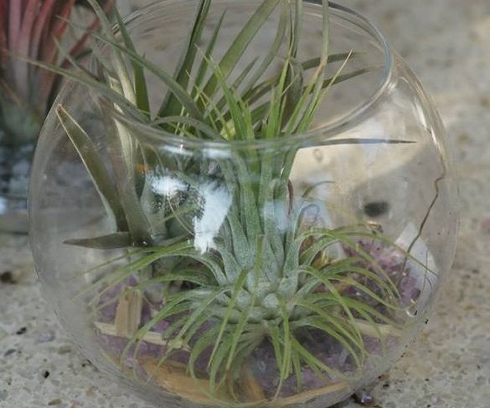 Plantas de estanque: Productos de El Vivero de Maruja