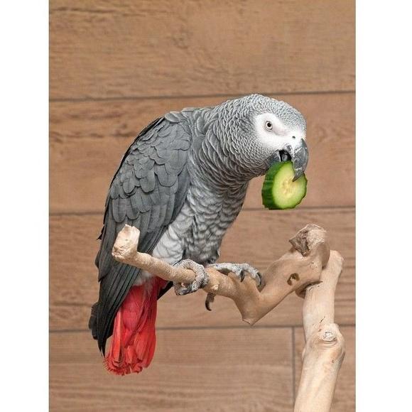 La correcta alimentación de las aves psitácidas, una ardua tarea