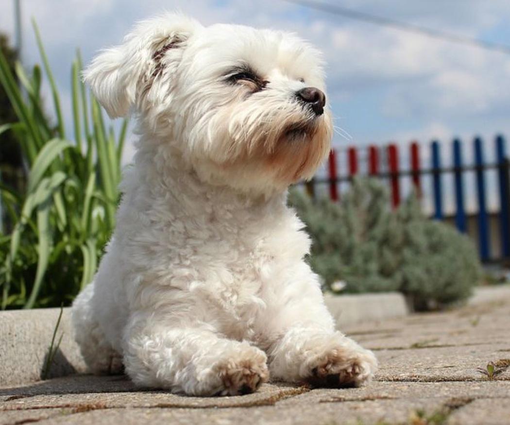Las mejores razas de perros para niños pequeños