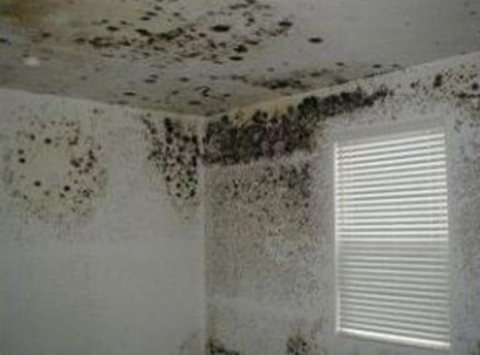 Eliminación de moho en interiores.