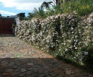 Profesionales de la jardinería en Tenerife