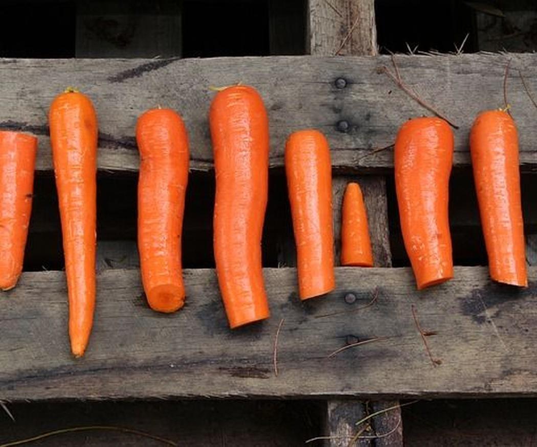 El futuro de las zanahorias