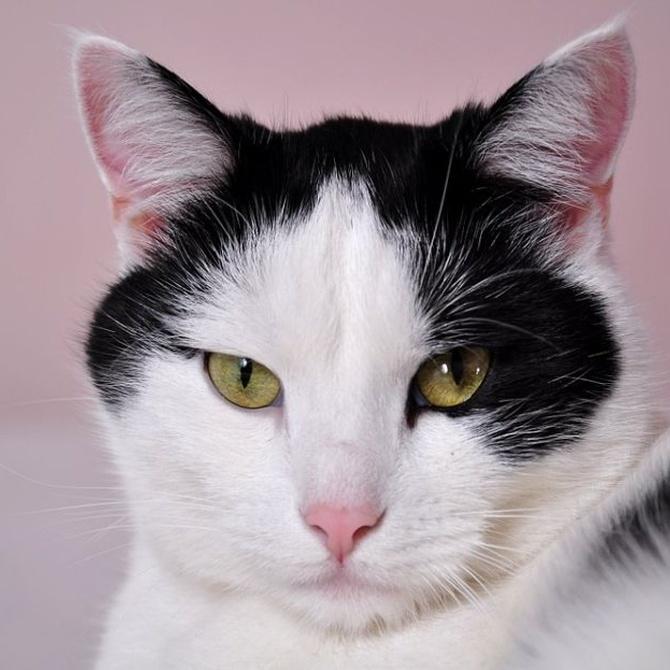 ¿Por qué llevar al gato a una peluquería felina?