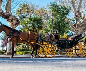 Coches de caballos para eventos en Sevilla