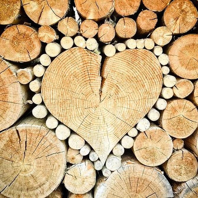 Estas son las mejores maderas para la fabricación de muebles