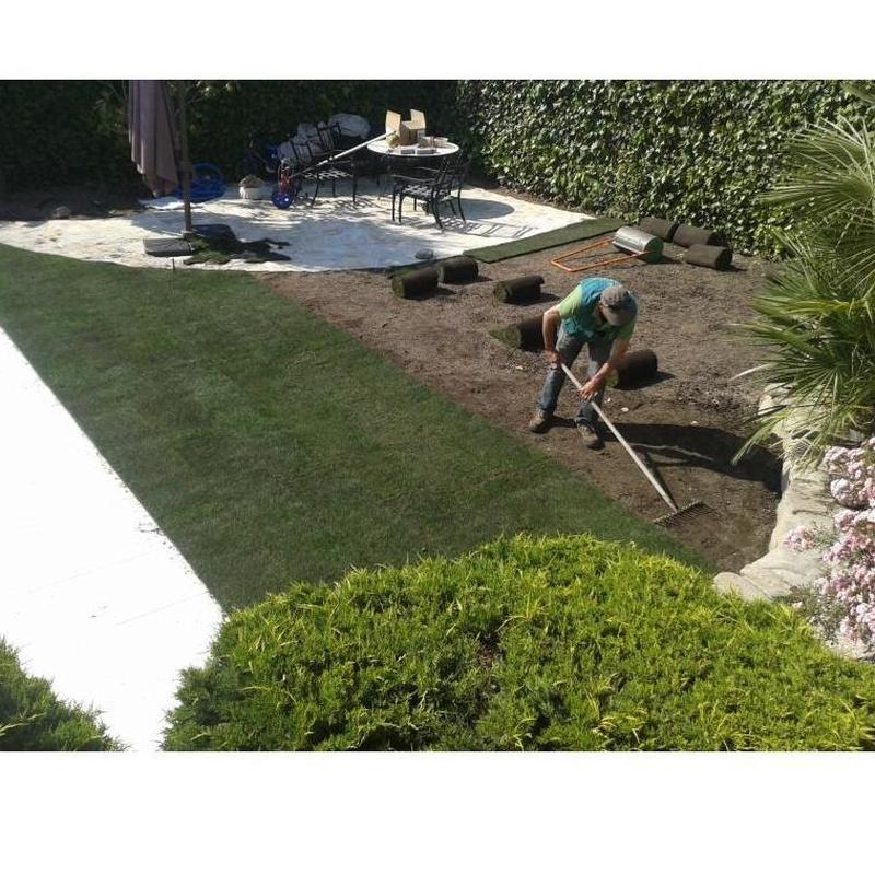 Césped natural: Servicios de Jardinería Sefer