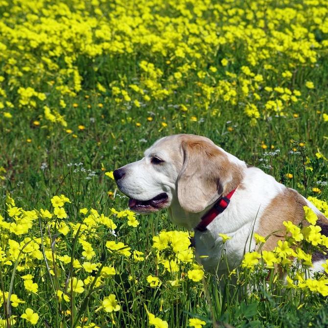 Consejos para cuidar las orejas y los ojos de tu perro
