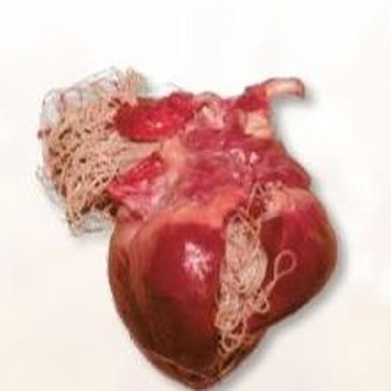 Dirofilariosis. :  de Clínica Veterinaria Rocafort