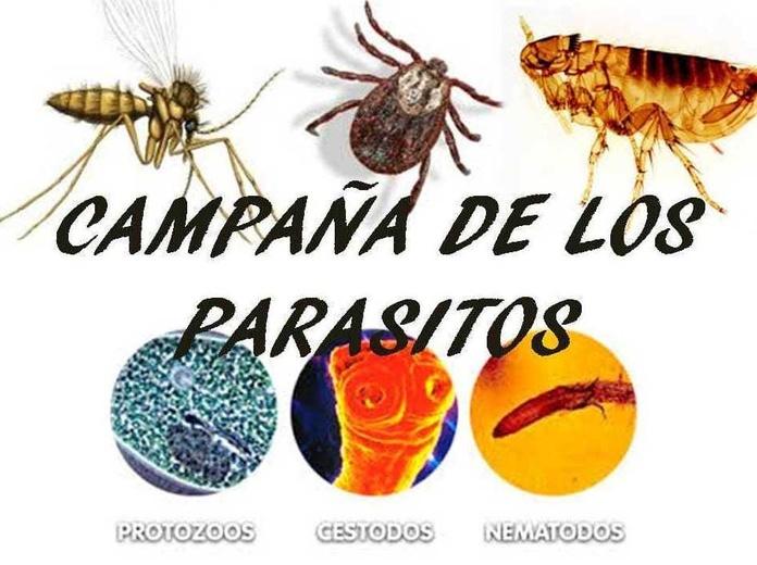 Campaña de los parásitos en clínica veterinaria Veracruz