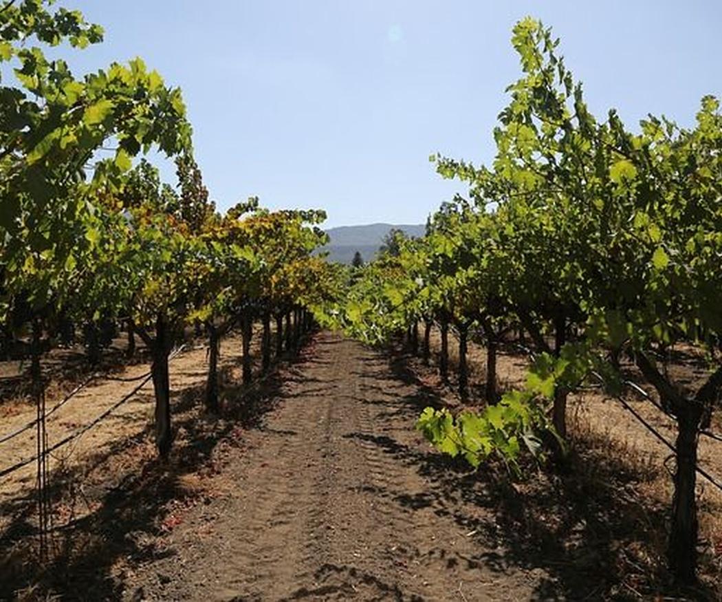 Historia de la uva Malbec