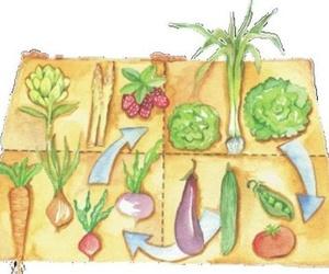 Rotaciones de cultivo