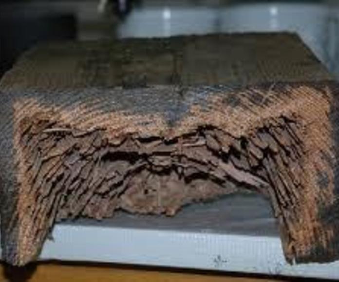 Tratamiento de termitas: ¿Qué hacemos? de Europest