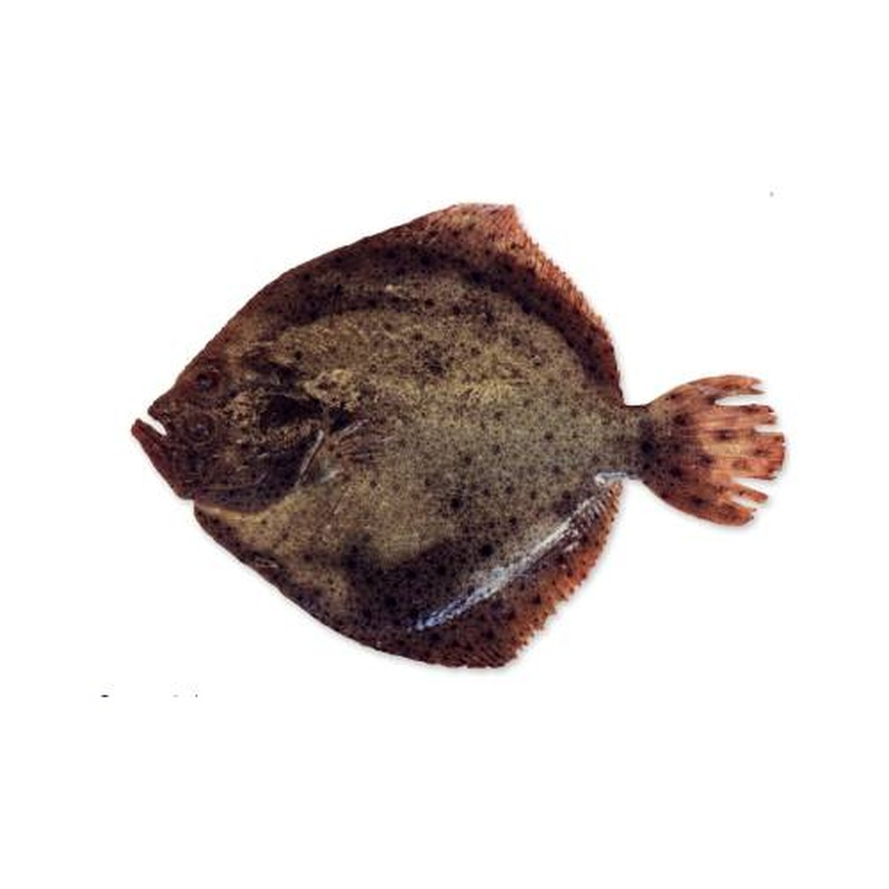 Acuicultura: Productos y Servicios de Peixes Vimar