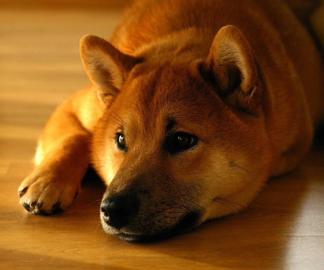 Juegos para entretener a tu perro dentro de casa