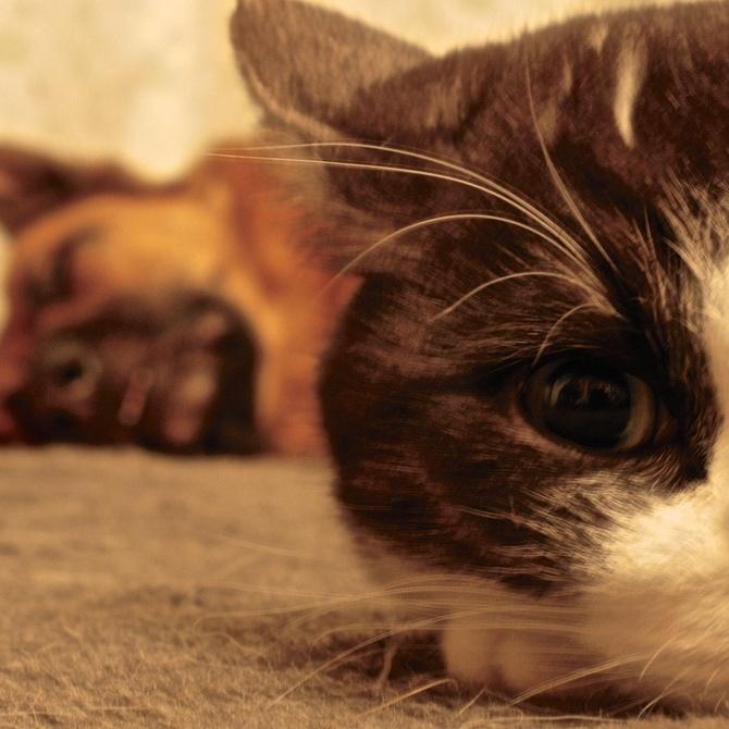 Limpieza de casas con animales domésticos