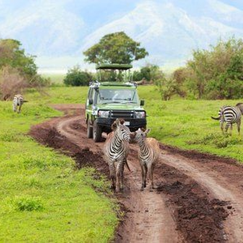 Safari en el Sur de Kenia y Costa del Índico: Destinos de Lucy Class Travel Tour