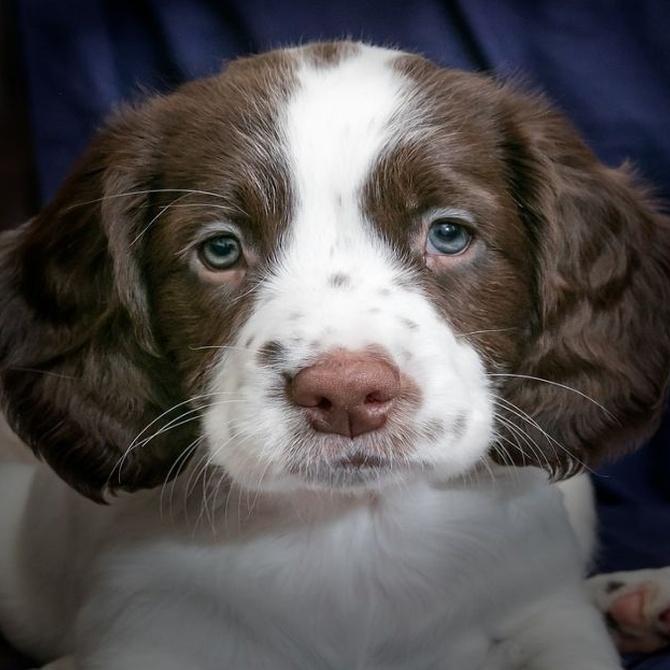 ¿Los perros tienen piojos?