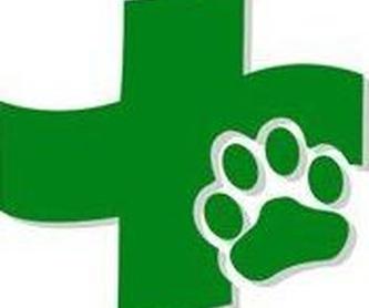 Traumatología: Servicios de Centro Veterinario Reyes Magos