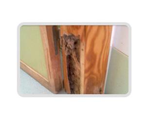 Control de termitas en Mérida
