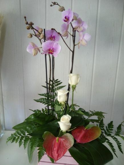centro frescor con planta de orquidea - flores maranta